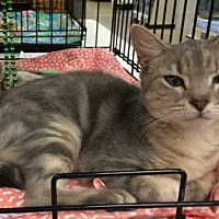 Adopt A Pet :: Moonlight - Cocoa, FL