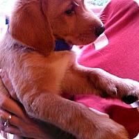 Adopt A Pet :: Derek - Waldorf, MD