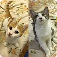 Adopt A Pet :: Skippy and Teddy, Total Mushes - Brooklyn, NY