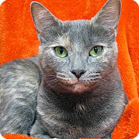 Adopt A Pet :: Clementine - Norwalk, CT