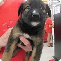Adopt A Pet :: Parson - Rocky Mount, NC