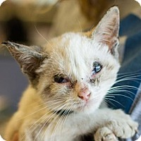 Adopt A Pet :: Rahven - Alpharetta, GA