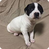 Adopt A Pet :: CHEROKEE - Spring Lake, NJ