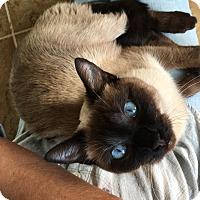 Adopt A Pet :: Pandora - Duluth, GA