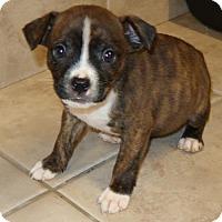 Adopt A Pet :: Zircon - Burbank, OH