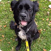 Adopt A Pet :: Miracle - Detroit, MI