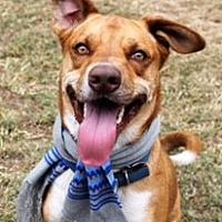 Hound (Unknown Type)/Hound (Unknown Type) Mix Puppy for adoption in Jesup, Georgia - Romeo