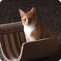 Adopt A Pet :: Joey - Byron Center, MI