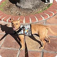 Adopt A Pet :: Missy - Rancho Santa Fe, CA