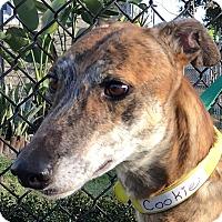 Adopt A Pet :: NB's Jugni - Longwood, FL
