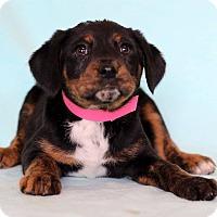 Adopt A Pet :: Cass - Waldorf, MD