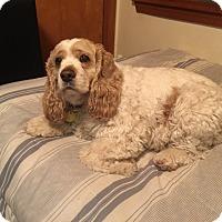 Adopt A Pet :: Josie 8yr - Mentor, OH