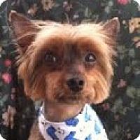 Adopt A Pet :: Lanuk - Freemont, CA