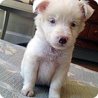 Adopt A Pet :: AJ - Available SOON - Savannah, GA