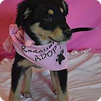 Adopt A Pet :: Dixie - Aurora, CO
