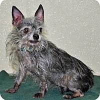 Adopt A Pet :: Trinket - Port Washington, NY