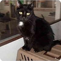 Adopt A Pet :: Willis - Hamburg, NY