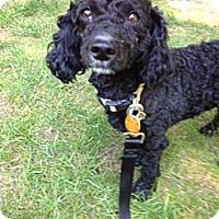 Adopt A Pet :: TOBY - W. Warwick, RI