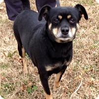 Adopt A Pet :: GINGER/part of bonded pair - Bedminster, NJ