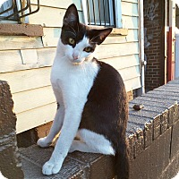 Adopt A Pet :: Harrison - Brooklyn, NY