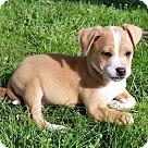 Adopt A Pet :: Becca!