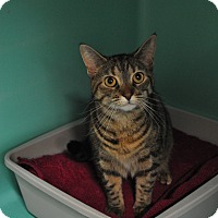 Adopt A Pet :: Lilly - Rockaway, NJ