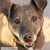 Labrador Retriever Mix Dog for adoption in Cedar Crest, New Mexico - Beau