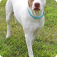 Adopt A Pet :: Emme D-65919 **Pooch with Perks** - Westampton, NJ