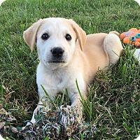 Adopt A Pet :: Jenna - Russellville, KY