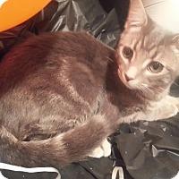 Adopt A Pet :: Rhett - Harrisburg, NC