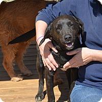 Adopt A Pet :: Thurman - Groton, MA
