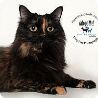 Adopt A Pet :: Chiquita - Alexandria, VA