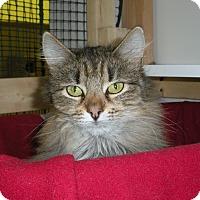 Adopt A Pet :: Amelia - Washington, VA