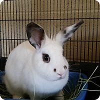 Adopt A Pet :: Iris - Chula Vista, CA