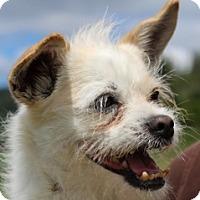 Adopt A Pet :: BoBo - Grants Pass, OR