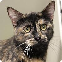 Adopt A Pet :: SPRING - Red Bluff, CA