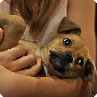 Adopt A Pet :: Grayson - Sparta, NJ