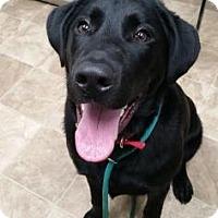 Adopt A Pet :: Escabar - Chico, CA