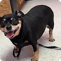 Adopt A Pet :: Filomena - York, SC