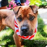 Adopt A Pet :: Jed - Brooklyn Center, MN