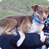 Adopt A Pet :: Molly(22 lb) New Pics & Video! - SUSSEX, NJ