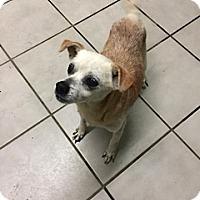 Adopt A Pet :: Chita - Aurora, IL