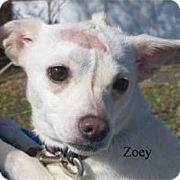 Adopt A Pet :: Chloe - Warren, PA