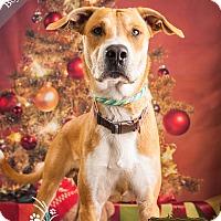 Adopt A Pet :: Bojangles - Ottawa, KS