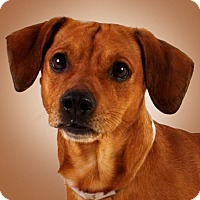Adopt A Pet :: Jax - Prescott, AZ
