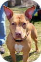 Terrier (Unknown Type, Medium) Mix Dog for adoption in Tinton Falls, New Jersey - Brooklyn