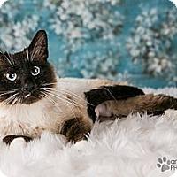 Adopt A Pet :: Bootsie - Eagan, MN