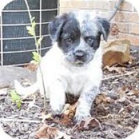 Adopt A Pet :: Winnie - Staunton, VA