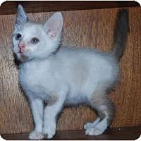 Adopt A Pet :: Jack Hanna - Colmar, PA