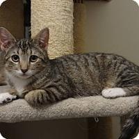 Adopt A Pet :: Willow-Adoption Pending! - Colmar, PA